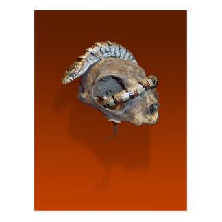 Lézard d'alligator sur une carte postale de crâne