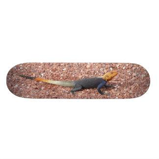 Lézard d'arc-en-ciel skateboard