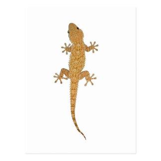 lézard de gecko carte postale
