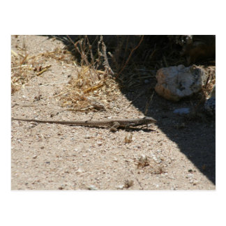 Lézard en carte postale de désert de l'Arizona