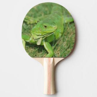 Lézard vert de rampement raquette de ping pong