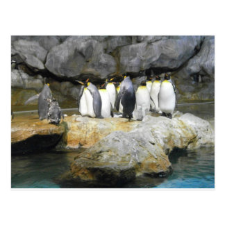 L'histoire de pingouin carte postale