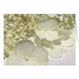 L'hortensia blanc de Lacecap fleurit la carte de