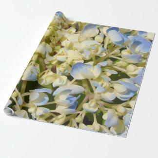L'hortensia bleu et crème fleurit la photo papier cadeau
