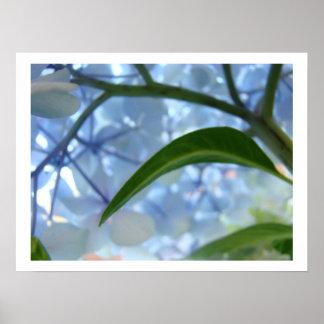 L'hortensia bleu fleurit des fleurs d'impression d poster