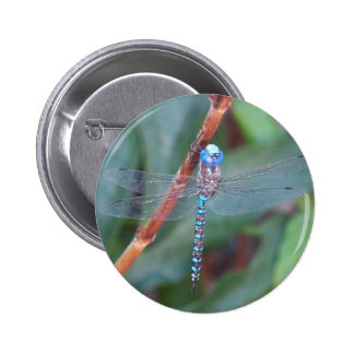 Libellule bleue badge