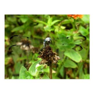 Libellule bleue de libellules sur une photo de cartes postales