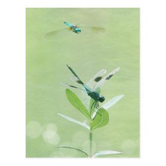 Libellule - Dasher bleu Carte Postale