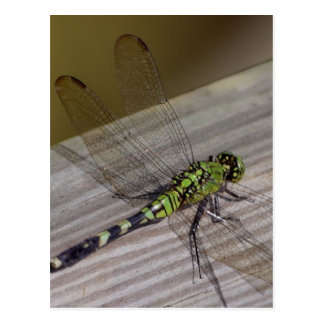 Libellule d'insecte cartes postales
