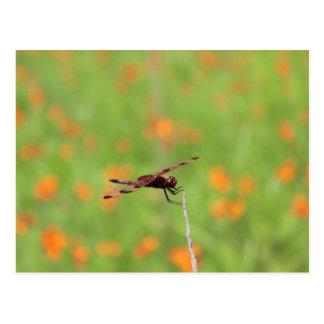 Libellule et fleurs oranges carte postale