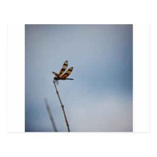 libellule seule carte postale