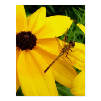 Libellule sur la fleur jaune carte postale