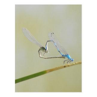 libellules dans l amour carte postale