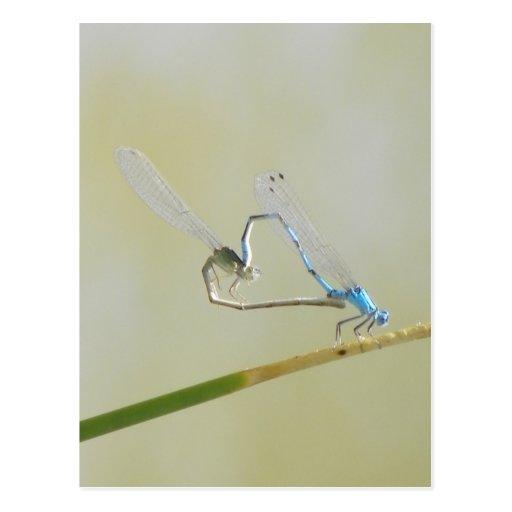 libellules dans l'amour carte postale