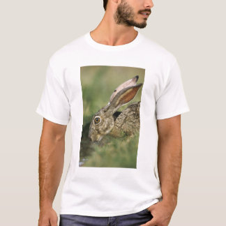 Lièvre à queue noire, californicus de Lepus, T-shirt