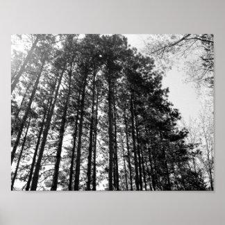 Ligne des arbres poster