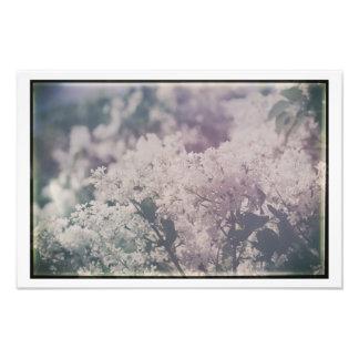 Lilas assez floraux lilas blancs antiques de impression photo