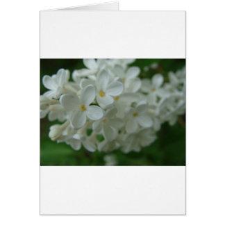 Lilas blanc carte de vœux