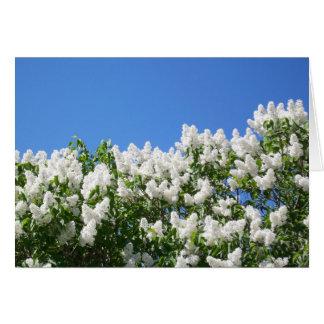 Lilas blancs 2 carte de vœux