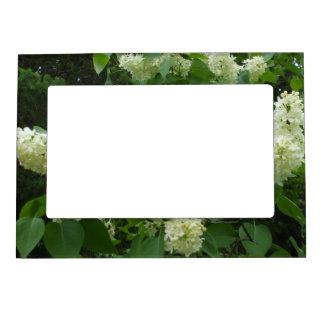 Lilas blancs cadre magnétique