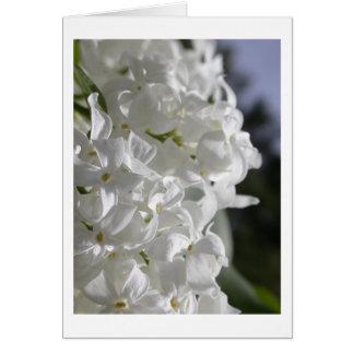Lilas blancs carte de vœux