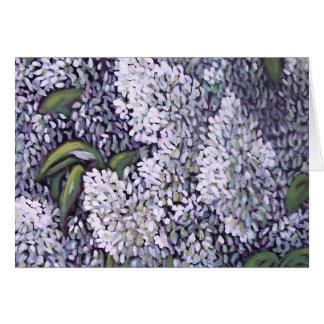 Lilas du blanc 100_2089 carte de vœux