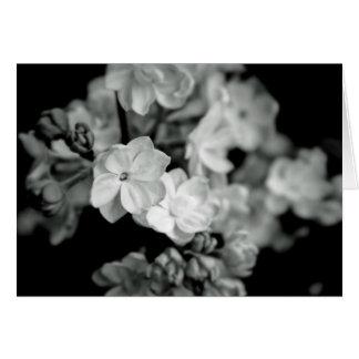 Lilas noirs et blancs carte de vœux