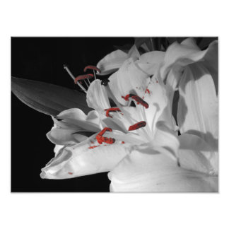 Lillies blanc photographie