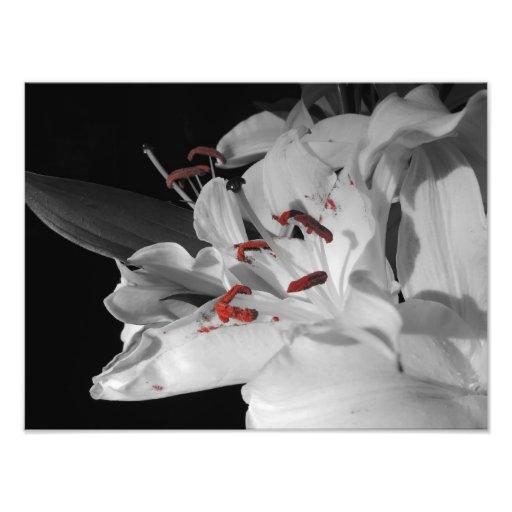Lillies blanc photo d'art