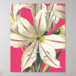 Lilly botanique dans le rose affiche