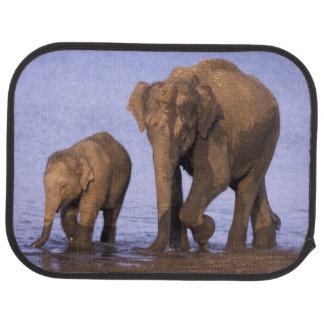 L'Inde, parc national de Nagarhole. Éléphant Tapis De Voiture