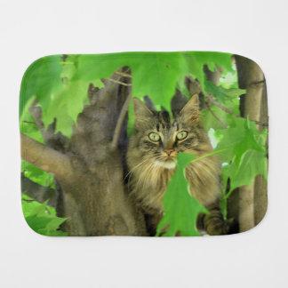 Linge De Bébé Chat de ragondin du Maine dans l'arbre