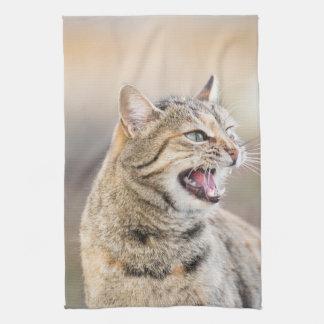 Linge De Cuisine Beau chat