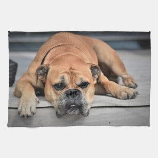 Linge De Cuisine Beau chien de bouledogue de Brown s'étendant sur