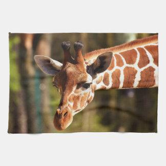 Linge De Cuisine Brown mignon et portrait blanc de visage de girafe