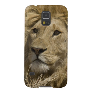 Lion africain, Panthera Lion, portrait d'a Protections Galaxy S5