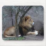 lion africain par l'arbre tapis de souris