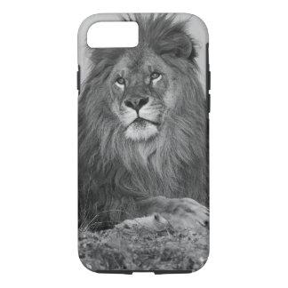 Lion africain se reposant sur la falaise de roche coque iPhone 7