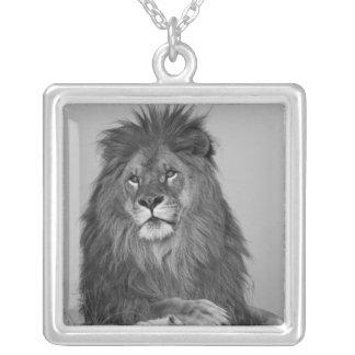 Lion africain se reposant sur la falaise de roche pendentif carré