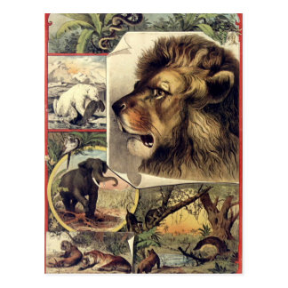Lion and wild animals vintage circus show cartes postales