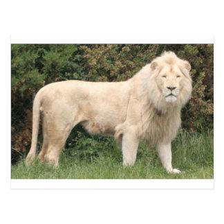 Lion blanc majestueux carte postale