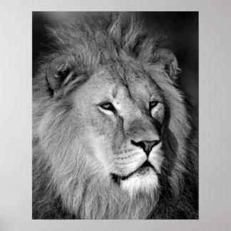 Lion blanc noir - art animal de photographie poster