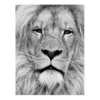 Lion blanc noir carte postale