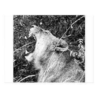 Lion Cartes Postales
