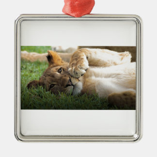 Lion CUB africain Ornement Carré Argenté