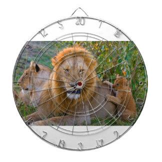 Lion CUB mignon jouant avec le papa, Kenya Jeux De Fléchettes