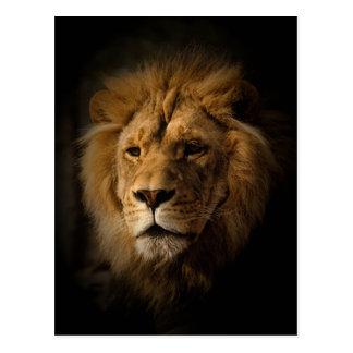 lion dans l'obscurité carte postale