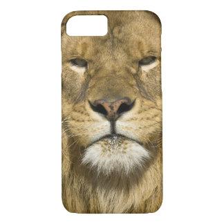 Lion de Barbarie d'Africain, Panthera Lion Lion, Coque iPhone 7