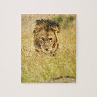 Lion de mâle adulte, Panthera Lion, masai Mara, Ke Puzzle