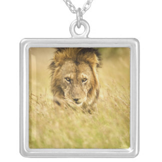 Lion de mâle adulte, Panthera Lion, masai Mara, Pendentif Carré